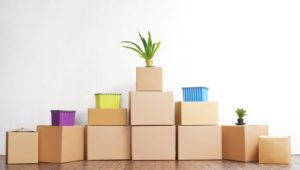 Packers and Movers Nasrapur